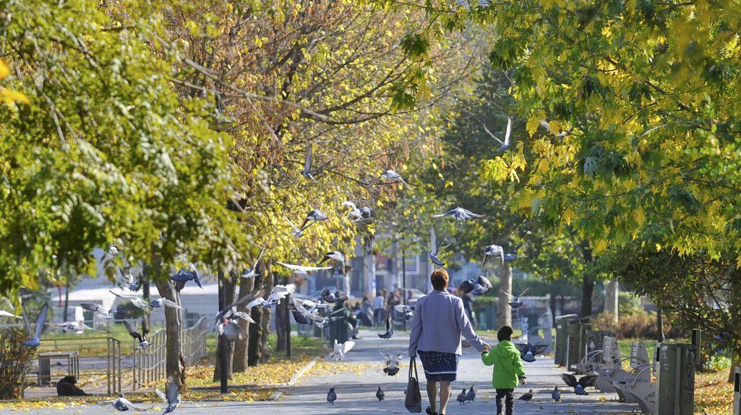 Alee din Parcul Izvor în București, cu pomii înverziți.