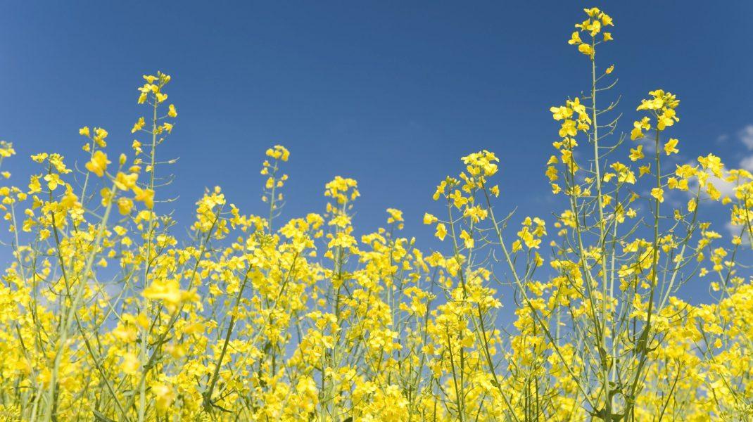Câmp cu flori într-o zi însorită.