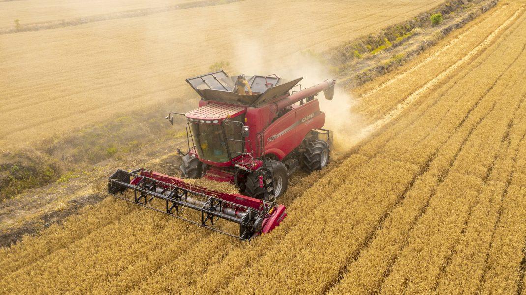 Lan de grâu cu o mașină care treieră spicele de grâu.