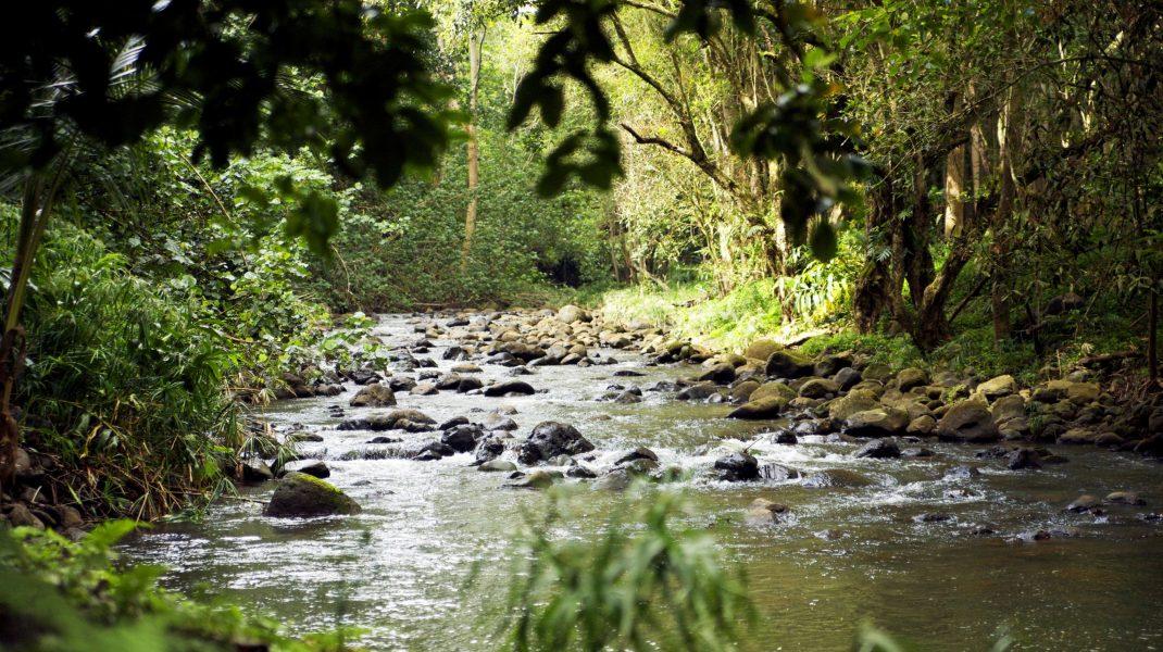 râu din hawaii