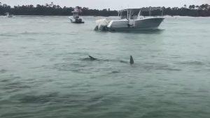 Video viral. Momentul în care un grup de rechini înconjoară persoanele aflate pe o plajă din Florida