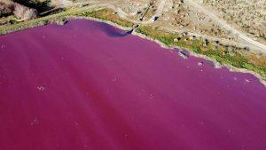 Un lac din Patagonia a devenit roz peste noapte. Cum s-a produs fenomenul. VIDEO