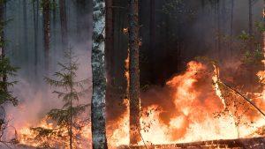 Incendii de vegetație în Siberia.
