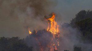 Incendiu de vegetație în Italia.