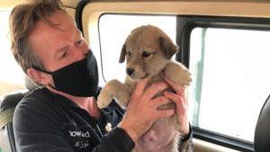 Un fost soldat britanic care ține în mână un cățeluș din adăpostul său de animale.