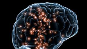 Creier văzut într-o reprezentare grafică.