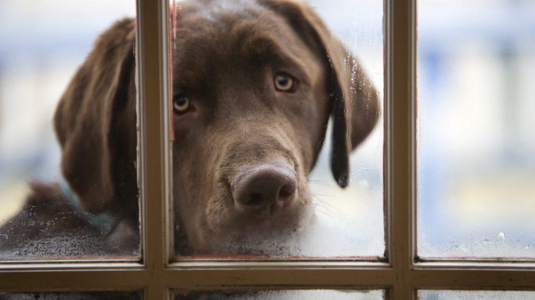 Consumul cărnii de câine ar putea fi interzisă în Coreea de Sud