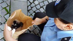 Amenda primită de un bucureștean pentru că a abandonat 5 pui de pisică pe stradă
